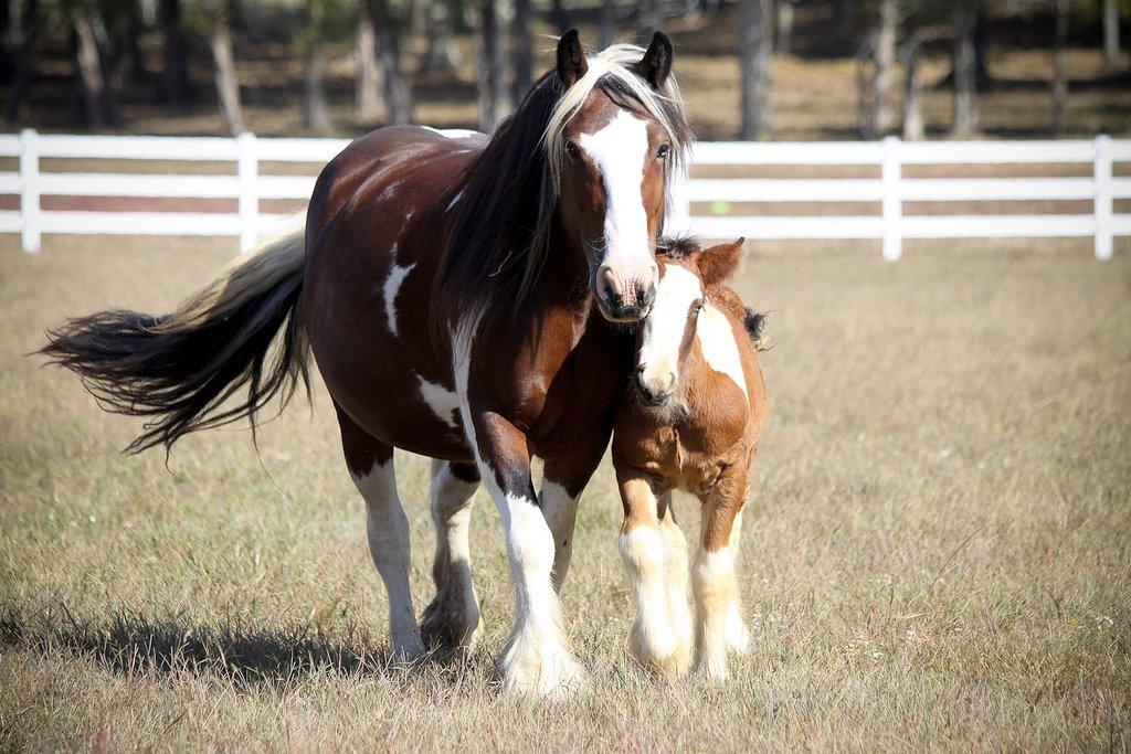 Photo taken as a Foal